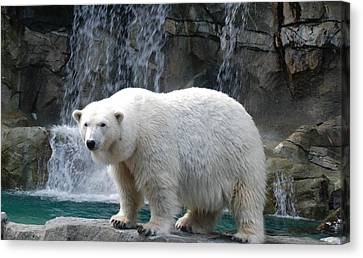 Polar Bear 2 Canvas Print by Richard Bryce and Family