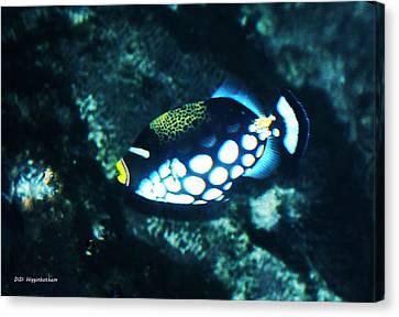 Polka Dot Fish Canvas Print by DiDi Higginbotham