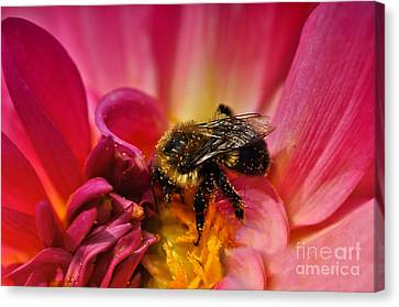 Pollen Covered  Canvas Print