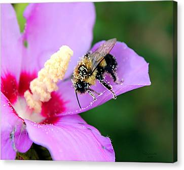 Canvas Print featuring the photograph Pollen Sprinkles by Laurinda Bowling
