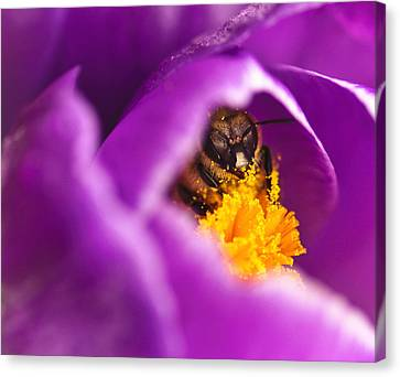 Pollination Party Of One Canvas Print by Vicki Jauron
