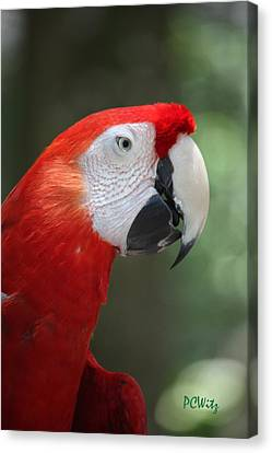 Canvas Print featuring the photograph Polly by Patrick Witz