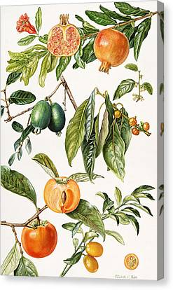 Pomegranate And Other Fruit Canvas Print