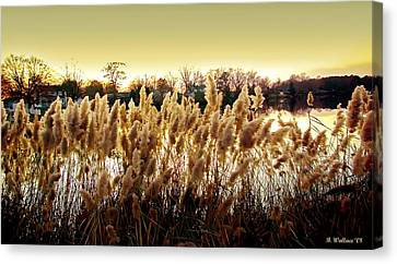 Pond Grasses Canvas Print by Brian Wallace