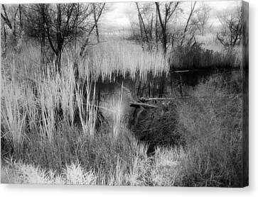 Pond Canvas Print by Mark Greenberg
