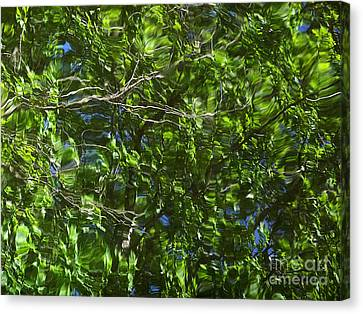 Pond Reflection 3 Canvas Print by Janeen Wassink Searles