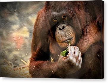 Pondering Canvas Print by Mark Papke
