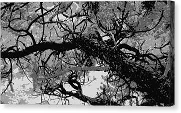 Canvas Print featuring the photograph Ponderosa Pine by Rosemarie Hakim