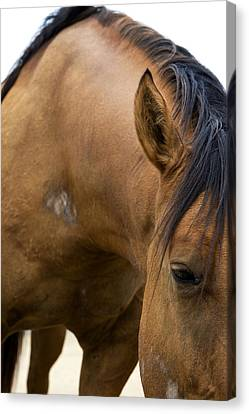 Canvas Print featuring the photograph Curious Pony by Lorraine Devon Wilke