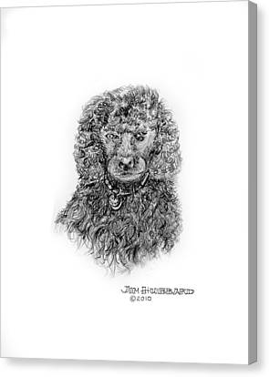 Canvas Print featuring the drawing Poodle by Jim Hubbard