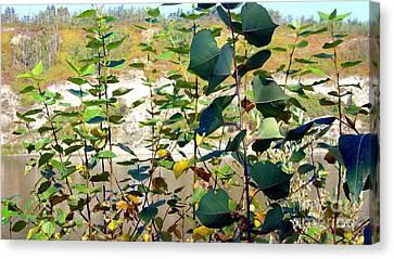 Canvas Print featuring the photograph Poplar Saplings by Jim Sauchyn
