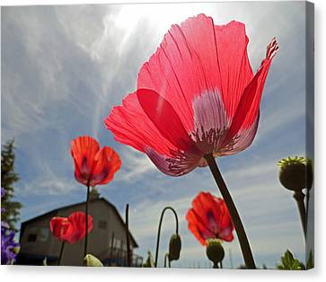 Poppies And Sky Canvas Print by Robert Meyers-Lussier