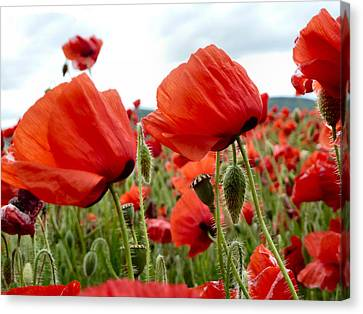 Poppies Canvas Print by Debra Collins