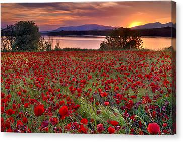 Lanscape Canvas Print - Poppies by Guido Montanes Castillo