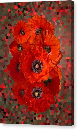 Poppies Canvas Print by Nigel Chaloner