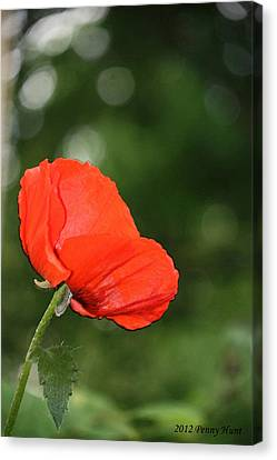 Canvas Print featuring the photograph Poppy Dreams by Penny Hunt