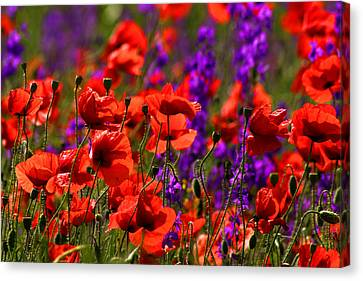 Canvas Print featuring the photograph Poppy Field by Emanuel Tanjala