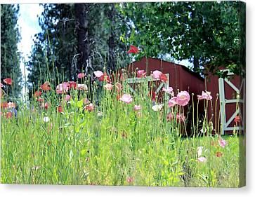 Poppy Field Canvas Print by Myrna Migala