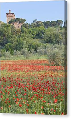 Poppy Field Canvas Print by Rob Tilley
