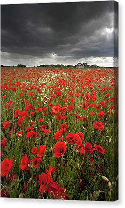 Poppy Field With Stormy Sky In Background Canvas Print by Chris Conway