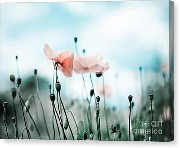 Poppy Flowers 02 Canvas Print