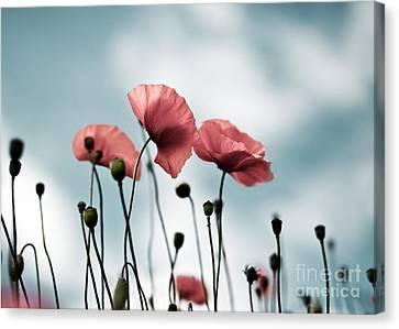 Flora Canvas Print - Poppy Flowers 07 by Nailia Schwarz