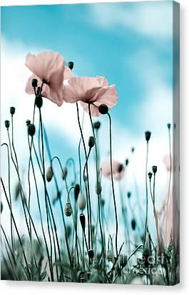 Poppy Flowers 09 Canvas Print by Nailia Schwarz
