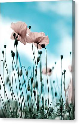 Poppy Flowers 09 Canvas Print
