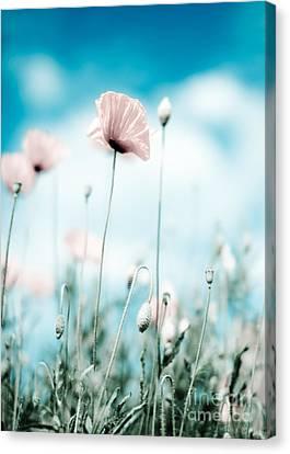 Poppy Flowers 13 Canvas Print
