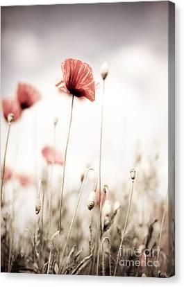 Poppy Flowers 15 Canvas Print