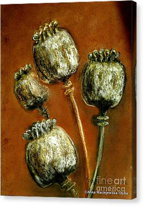 Poppy Seed Heads Canvas Print by Anna Folkartanna Maciejewska-Dyba