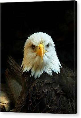 Canvas Print featuring the photograph Portrait American Bald Eagle by Randall Branham