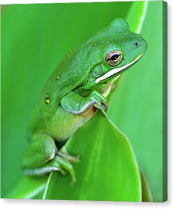 Portrait In Green Canvas Print by Jeff R Clow