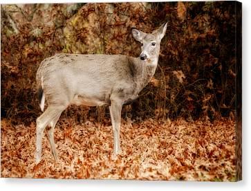 Portrait Of A Deer Canvas Print by Kathy Jennings