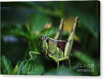 Portrait Of A Grasshopper Canvas Print by Theresa Willingham