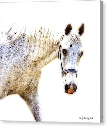Portrait Of A Horse Series II Canvas Print by Kathy Jennings