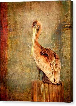 Portrait Of A Pelican Canvas Print by Karen Lynch