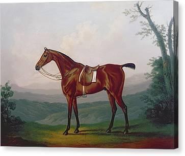 Portrait Of A Race Horse Canvas Print by Daniel Clowes