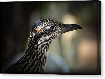 Portrait Of A Roadrunner  Canvas Print by Saija  Lehtonen