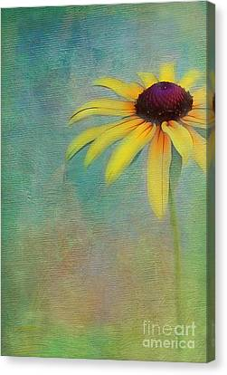 Portrait Of A Sunflower Canvas Print by Judi Bagwell