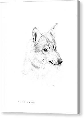 Portrait Of A Wolf Canvas Print by Peter Edward Green