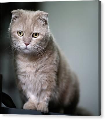 Portrait Of Cat Canvas Print by LeoCH Studio