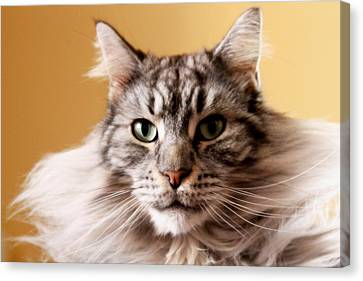 Portrait Of Cat Canvas Print by Mangini Photography