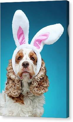 Portrait Of Dog Wearing Easter Bunny Ears Canvas Print by Jade Brookbank