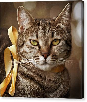 Portrait Of Tabby Cat With Yellow Ribbon Canvas Print