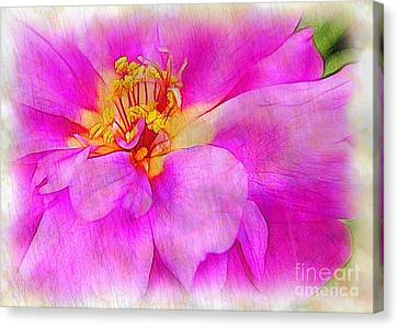 Portulaca With Texture Canvas Print by Judi Bagwell