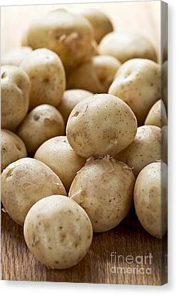 Potatoes Canvas Print by Elena Elisseeva
