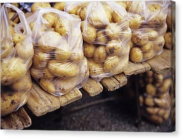 Potatoes Canvas Print by Veronique Leplat