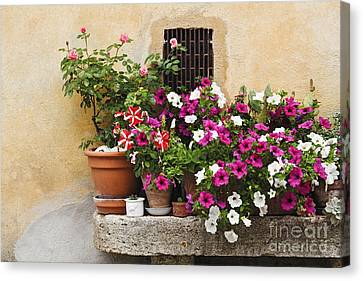 Potted Plants On Stone Bench Canvas Print by Jeremy Woodhouse
