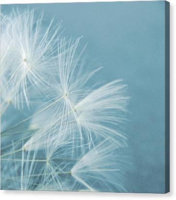 Powder Blue Canvas Print by Sharon Lisa Clarke